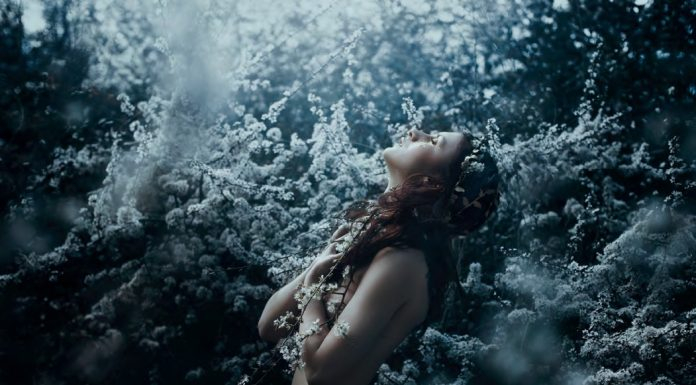 Cordelia, or the Price of Salt by SARA CLETO Photography by Bella Kotak