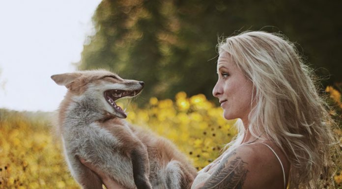 Images by Rachel Lauren Photography Spring time foxes