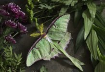 Emily Yeadon, Enchanted Living Magazine, Interview, Moth, Felt,