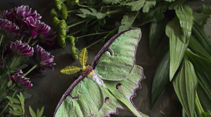 Emily Yeadon, Enchanted Living Magazine, Interview, Moth, Felt,