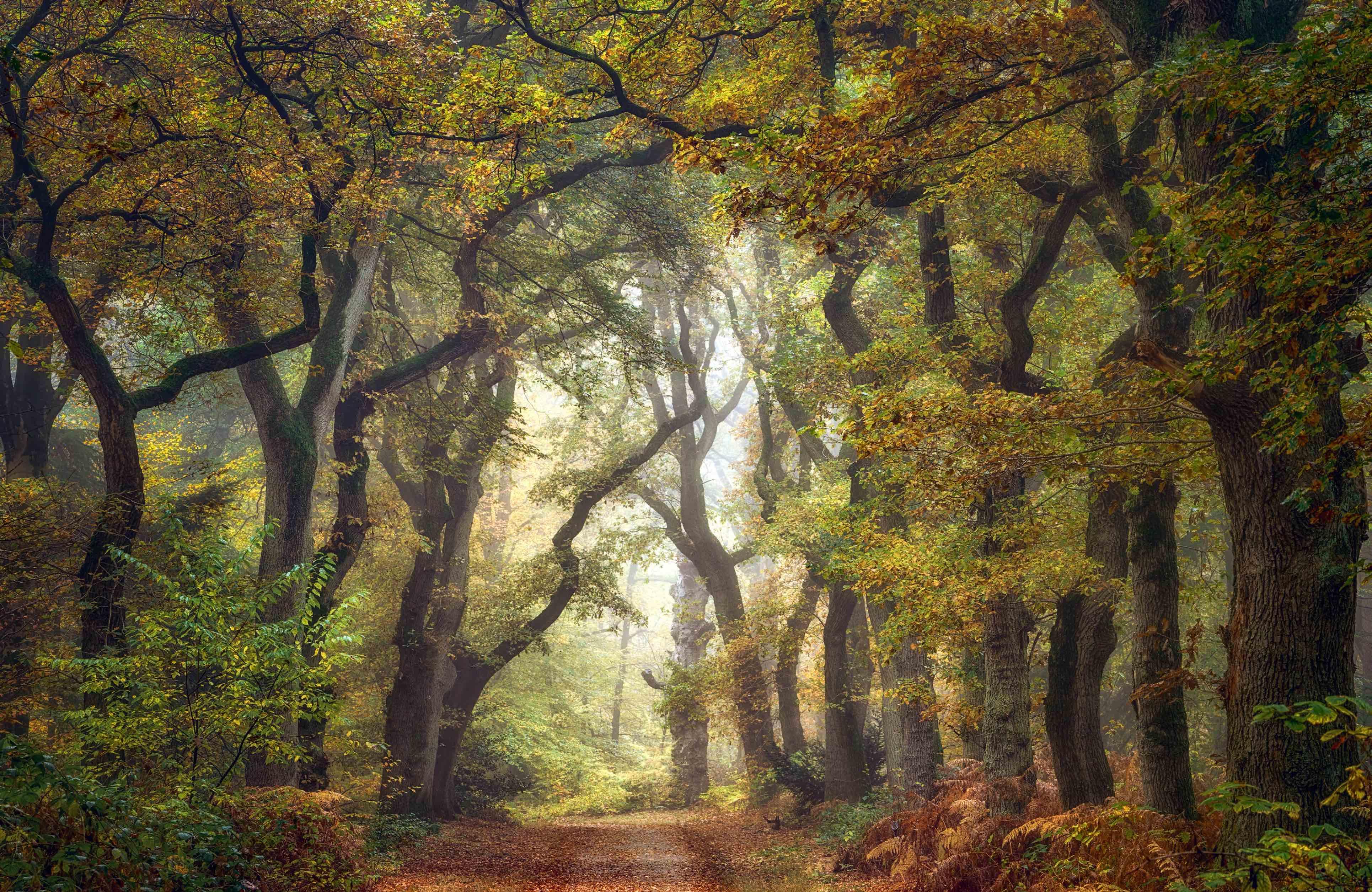 Ellen Borggreve Forest