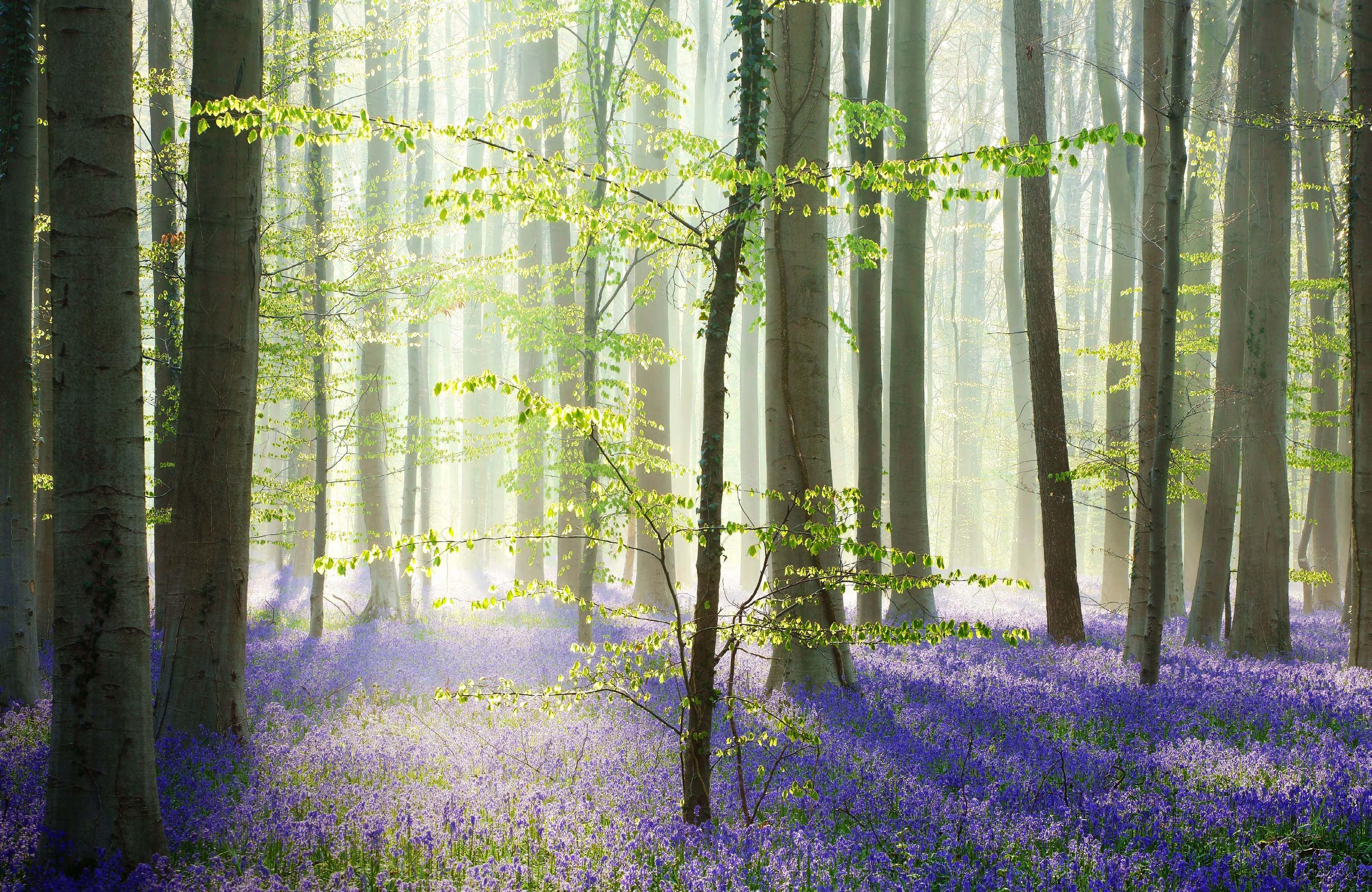 Kilian Schoenberger Forest