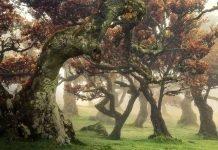 Martin Podt Forest