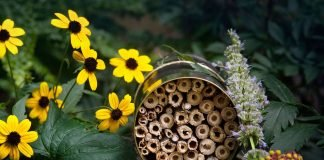 Make a Bee Hotel by Jennifer Muck-Dietrich Enchanted Living Magazine
